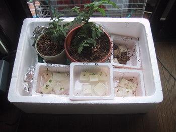 水耕栽培やってみたくなりました:So-netブログ